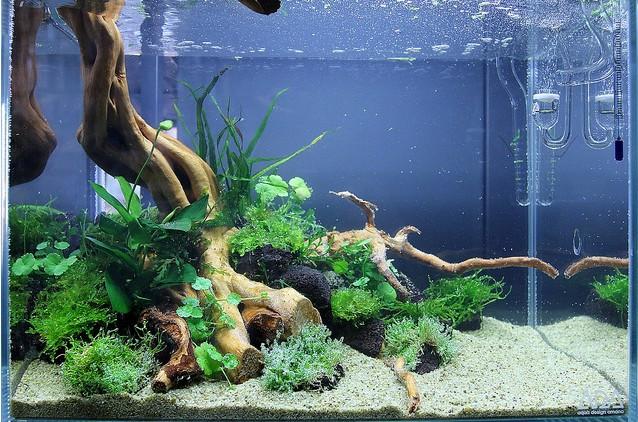 孔雀鱼组缸设计图_水草缸造景沉木水草泥化妆砂青龙石45CM及以下尺寸设计18_水景堂