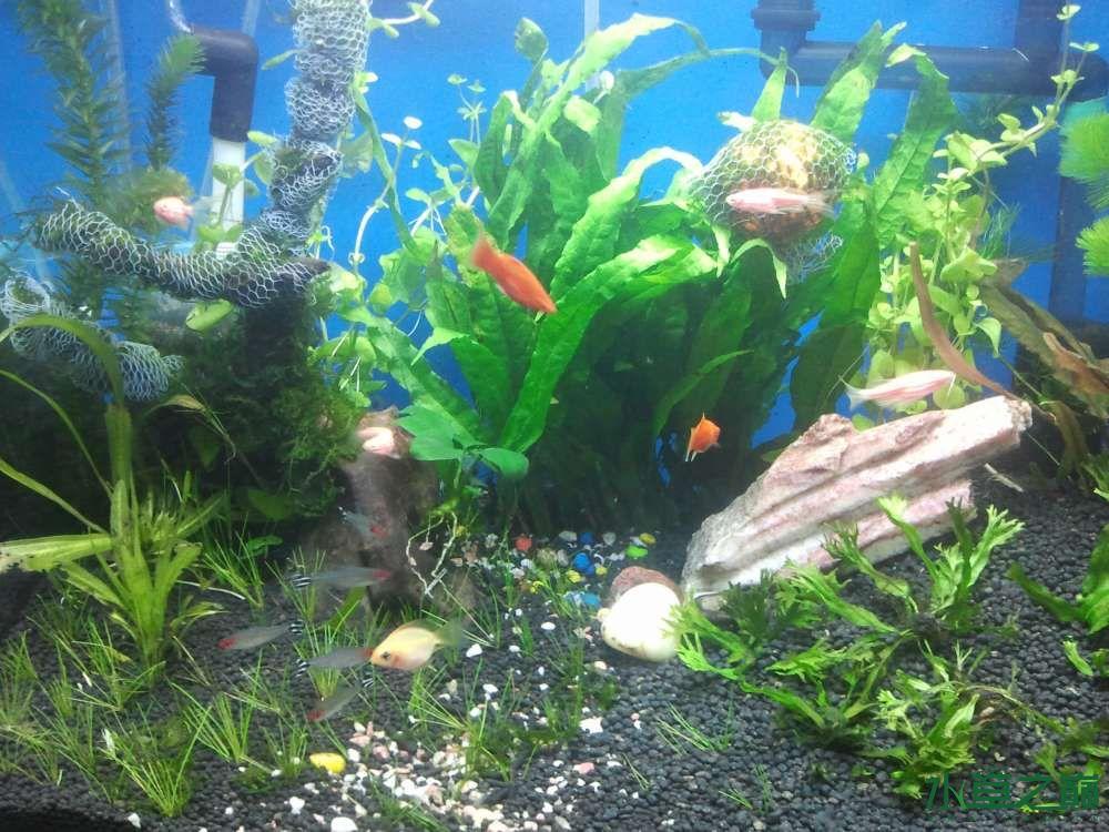 壁纸 海底 海底世界 海洋馆 水草 水生植物 水族馆 1000_750