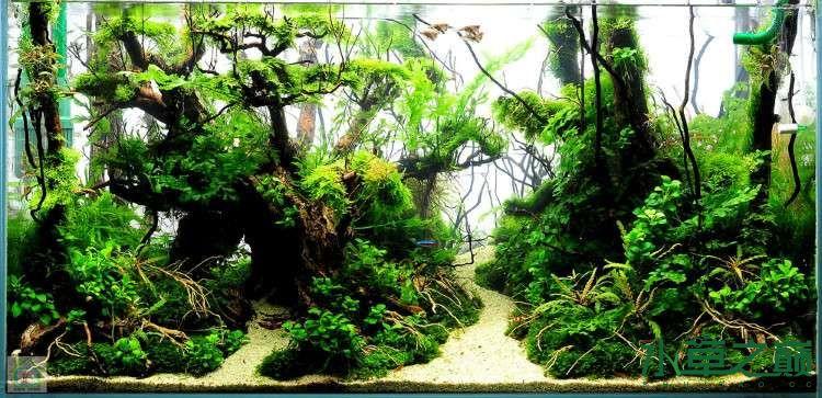 可是在学习观赏鱼缸造景前,需要先清楚底砂,水草,沉木,石头,鱼类的