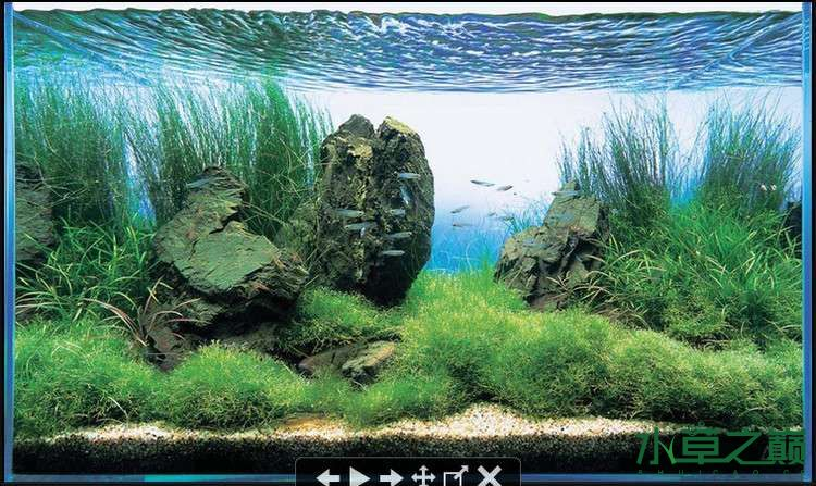水草造景鱼缸造景石头图片