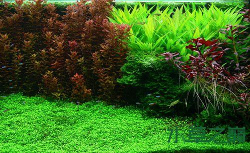孔雀鱼组缸设计图_荷兰式造景水草缸有没有喜欢的_水景堂