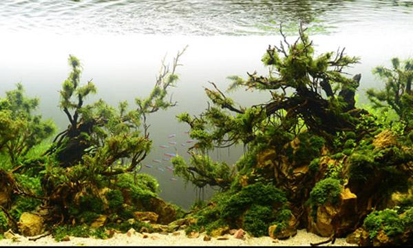 树木鱼缸图片大全