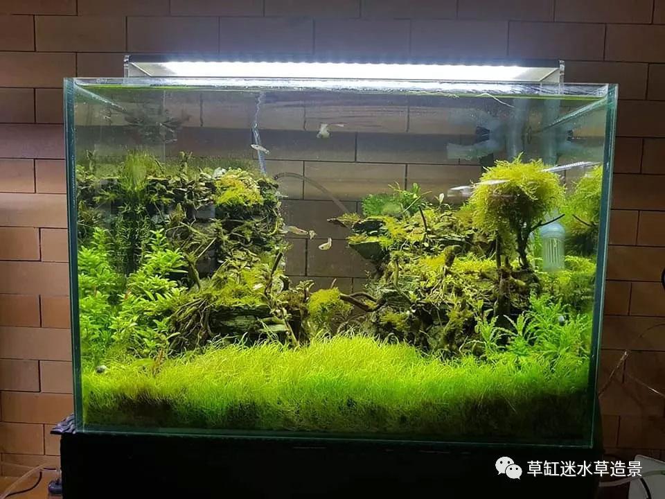 孔雀鱼组缸设计图_草缸小缸组欣赏高清图_水景堂
