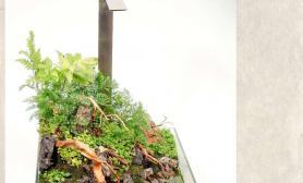 水草造景30 ×30cm水陆缸一枚