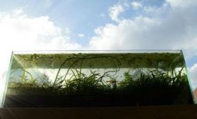 窗台边上无人打理水草缸在阳光下自然生长的水草缸