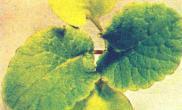 水草养殖常见的营养性疾病:微量元素缺乏症