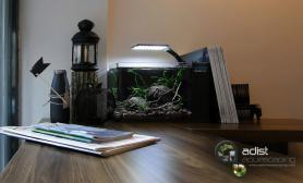 适合放在办公桌上的小型原生缸30cm作品