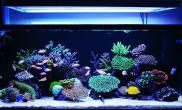 海水nicking234150x75x60sps/lps混养缸