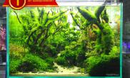 比赛作品ACT aquascape contest 2017水草缸欣赏