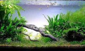 分享一下超赞的作品水草缸大家一起欣赏