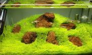 挖耳缸看腻了水草缸如何修改下比较好沉木杜鹃根青龙石水草泥