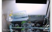 水草缸造景沉木水草泥化妆砂青龙石90CM尺寸设计10
