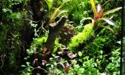 雨林水陆生态缸35