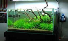 水草之巅迎新冬:草缸造景沉木是亮点