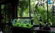 这才叫自在啊鱼缸水族箱缸里缸外全都是绿色植物鱼缸水族箱
