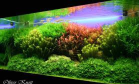 水草缸造景沉木水草泥化妆砂青龙石150CM及以上尺寸设计04