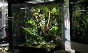 办公桌上的雨林生态缸
