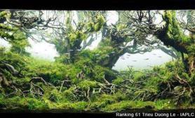 经典水草造景收藏集(五)