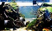 火山岩和枝杈的组合水草缸求大神指点