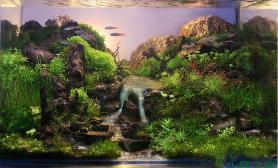 鱼缸造景国外一神人的作品水草缸