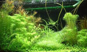 水草图集水草缸大师级造景