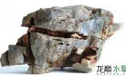 非标准超矮岩组缸拍摄水草缸缸内生物蛮多哦