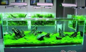 观赏水草的五大基本特点