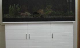 2007年3月3号新建的缸水草缸请使劲拍