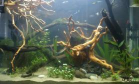 水草造景多多鱼缸 就是要打造更好看的鱼缸
