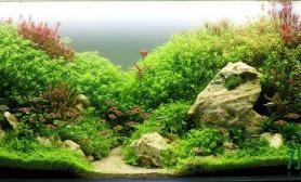 大草缸一眼望去草无穷尽的感觉真好鱼缸水族箱真美鱼缸水族箱