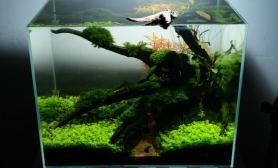 沉木青龙石水草造景45CM及以下尺寸设计45