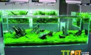水草造景缸适合添加那些类型的鱼