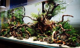 杜鹃根与火山石碰撞出的美景鱼缸水族箱鱼缸水族箱鱼缸水族箱