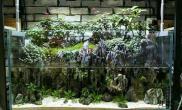水陆缸丛林式造景