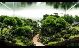 水草造景【水草造景篇】梵 谷