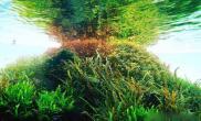 水族箱造景开缸水草缸这可是开大缸水草缸开超大水草缸鱼缸水族箱