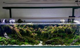 玻璃缸中的大自然93