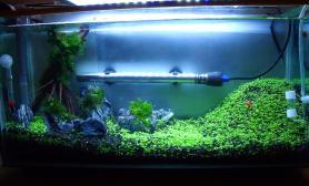 2号开缸撒草籽水草缸半月啦水草缸漫山遍野的春色鱼缸水族箱