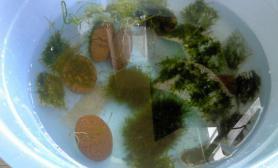 鱼缸造景新到的水草~~~