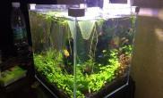 20方水草缸无CO2水草缸新手缸鱼缸水族箱