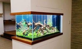 造景缸与家装空间嵌入式的隔断水草造景案例展示
