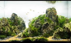 90*50*50青龙石造景