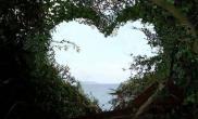 一草友送给女票的求婚礼物水草缸浪漫温馨