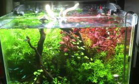 重发水草缸三个月后疯长的水草沉木杜鹃根青龙石水草泥40小缸
