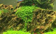 水草造景剪掉叶底红的90缸和45cm迷你矮虾缸