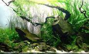 日本Charm水草造景比赛-10