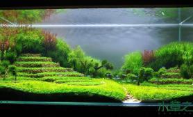 水草造景作品:水草造景(90cm)-34