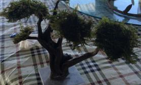 发一颗莫斯树的造型,大家欣赏下,我纯新手,就是感觉这颗树可以做小景