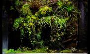 雨林生态缸方缸空气兰空凤苔藓生态缸