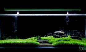 鱼缸造景这三个造景水草缸你喜欢哪个?来投票~